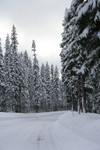 Free Picture of Icy Road in Rogue River National Forest