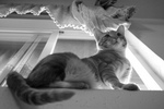 Free Picture of Cat on a Window Sill