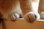 Free Picture of Cat's Paws on a Window Sill