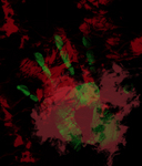 Free Picture of Finger and Hand Prints