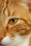 Free Picture of Cat Face