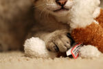 Free Picture of Kitten's Paw on a Toy