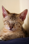 Free Picture of Tired Happy Kitten