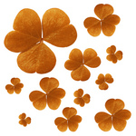 Free Picture of Orange Clovers
