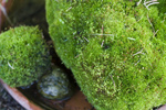 Free Picture of Moss Rocks