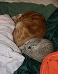 Free Picture of Sleeping Cats