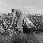 Free Picture of Cotton Picker