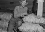 Free Picture of Potato Farmer
