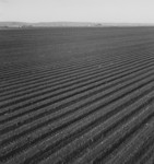 Free Picture of Large Scale Commercial Agriculture