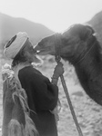 Free Picture of Camel Kissing His Master