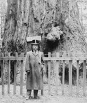 Free Picture of President Roosevelt, Big Tree Grove