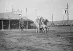 Free Picture of Wild West Polo Coney Island