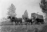 Free Picture of Horse Drawn Wagon