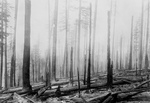 Free Picture of Forest Fire Aftermath