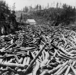 Free Picture of Logs on a River