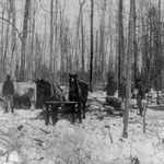 Free Picture of Logging in a Forest