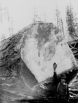 Free Picture of Man by a Fir Log