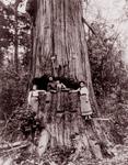 Free Picture of Lumberjack Posing in Tree