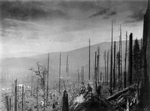Free Picture of Devastated Forest