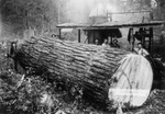 Free Picture of Fir Log at Yarding Donkey