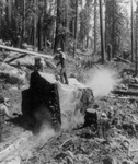 Free Picture of Mules Hauling Logs