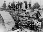 Free Picture of Lumberjacks With Sequoia