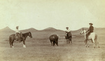 Free Picture of Cowboys Roping a Buffalo