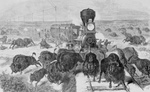 Free Picture of Hunters Shooting Bison From a Train