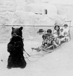 Free Picture of Bear Pulling a Sled