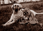 Free Picture of Girl Resting on a Dog