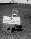 Free Picture of American Red Cross Dog