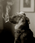 Free Picture of Dog Smoking a Cigarette and Being Humanlike