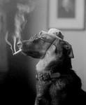 Free Picture of Dog Smoking