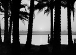 Free Picture of Woman by Palm Trees