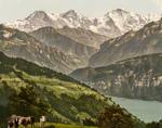 Free Picture of Cows Near Lake Thun, Switzerland