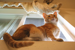 Orange Cat on a Window Sill