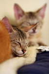 Kittens Resting on a Heating Pad