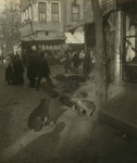 Dogs in the Street, Constantinople