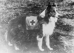 Red Cross Dog