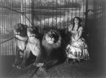 Adgie in Cage With 3 Lions