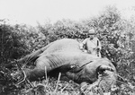 Roosevelt With Elephant He Just Killed