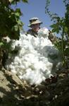 Soldier With Cotton