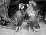May Blayney and Maude Adams as Chickens in Chantecleer