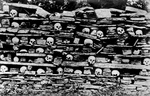 Human Skulls on a Rock Shelf