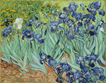 Picture of the Painting of Irises by Vincent van Gogh