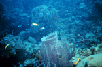 Picture Of ABlue Reef Scene With A Large Barrel Sponge