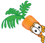 Clip Art Graphic of an Organic Veggie Carrot Mascot Character Looking Around a Corner