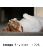 #1006 Picture Of A Cat Laying On Her Back