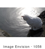 #1058 Picture Of A White Cat Looking At The Rogue River