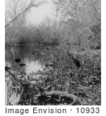 #10933 Picture Of An Alligator And Bird In A Swamp